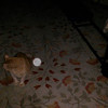 This is the second and final still image of Archangel Gabriel with my cat Pumpkin; as captured on video the evening of March 23, 2015.