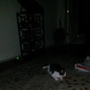This still image, of Archangel Raphael appearing as an emerald green orb, was captured on video the evening of July 16, 2014. Raphael is actually on a water bowl I had in my living room. The cat in this image is my handicapped cat, Boo Boo, who is missing his back left foot. Raphael was infusing the water with his healing energy to help Boo Boo with his pain, since Boo has trauma induced arthritis in his spine and limbs from being hit by a car as a kitten and having several orthopedic surgeries to repair his body.