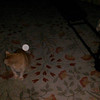 This is one still image, of two images presented, of Archangel Gabriel with my cat Pumpkin; as captured on video the evening of March 23, 2015.