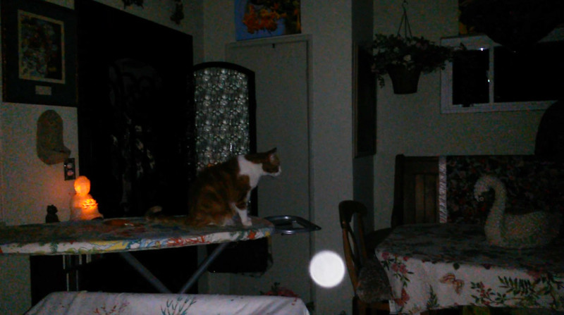 This is one still image, of five images presented, of Archangel Michael with my cat Canoodle; as captured on video the evening of August 16, 2017.