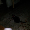 This is one still image, of five images presented, of Archangel Ariel with my cat, Cheekers; as captured on video the evening of May 16, 2014.