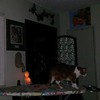 ARCHANGEL MICHAEL WITH MY CAT CANOODLE (NORMAL SPEED) - AS CAPTURED ON VIDEO THE EVENING OF AUGUST 16, 2017