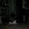 This is a still image of Archangel Gabriel with my cat Boo Boo; as captured on video the evening of July 31, 2017.