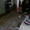 This is the second and final still image of Archangels Ariel (orb touching my cat's leg) and Gabriel (translucent orb at the base of the wall and next to the water bowl on the ground) with my cat, Canoodle; as captured on video the morning of July 16, 2014.
