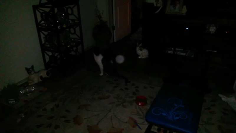 THE LIGHT OF MY FIANCE, KEN, WITH BOO BOO (IN SLOW MOTION) - AS CAPTURED ON VIDEO THE EVENING OF JUNE 13, 2016