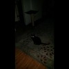 THE LIGHT OF MY CAT, TSAVO, AND ARCHANGEL ARIEL - AS CAPTURED ON VIDEO THE EVENING OF MAY 16, 2014
