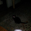 This is the second still image, of five images presented, of Archangel Ariel with my cat, Cheekers; as captured on video the evening of May 16, 2014.