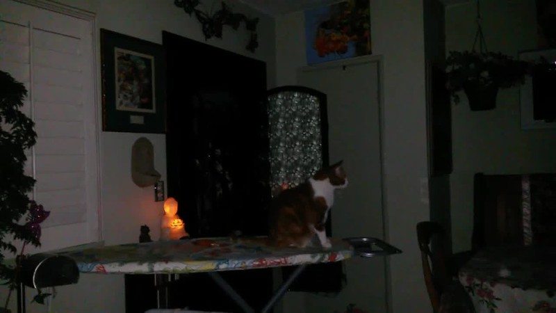ARCHANGEL MICHAEL WITH MY CAT CANOODLE (IN SLOW MOTION) - AS CAPTURED ON VIDEO THE EVENING OF AUGUST 16, 2017