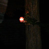 This is the fourth and final still image of The Light of Jesus; as captured on video the evening of June 10, 2014.