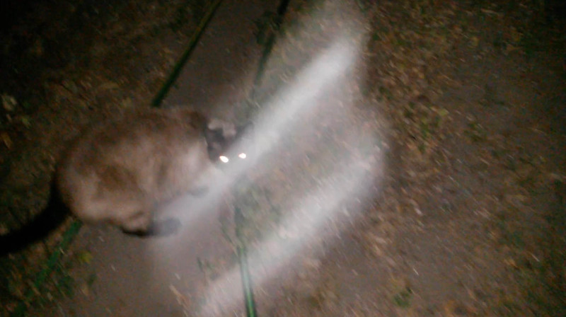 This is a still image of the Light of Jesus, moving across my cat Snickers, as captured on video the evening of April 29, 2016. Again, Jesus' form was that of a scroll and He has been appearing in this form more and more.