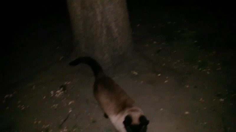 THE LIGHT OF JESUS WITH MY CAT SNICKERS - AS CAPTURED ON VIDEO THE EVENING OF APRIL 3, 2017