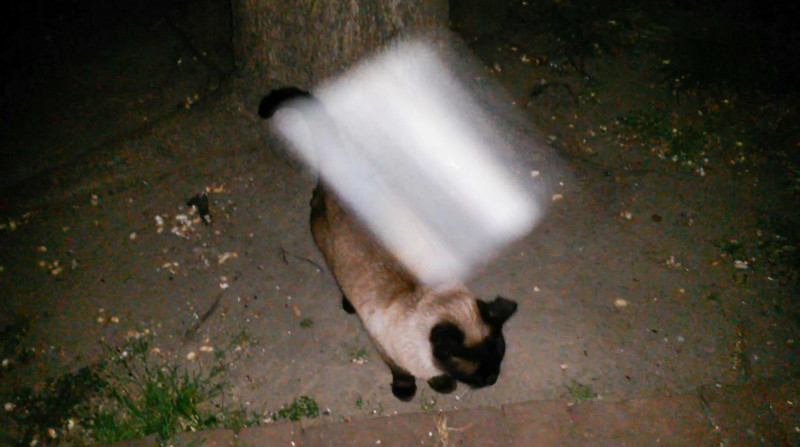 This is one still image, of two images presented, of The Light of Jesus; as captured on video the evening of April 3, 2017. <br /> <br /> Do you see how Jesus appears in a size that mirrors the size of my cat, Snickers? Snickers is usually by my side when I do my photography and Jesus and the Angels enjoy being photographed with him.