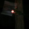 THE LIGHT OF JESUS IN SLOW MOTION - AS CAPTURED ON VIDEO THE EVENING OF JUNE 10, 2014