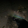 Isn't this an awesome image of The Light of Jesus over my cat's head??!!<br /> <br /> This is the fifth still image, of thirty-nine images presented, of The Light of Jesus; as captured on video the evening of September 30, 2014.