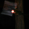 This is the third still image, of four images presented, of The Light of Jesus; as captured on video the evening of June 10, 2014. In this image, you can clearly see how His Light illuminates the background of the trees in my neighbor's yard.