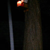This still image, of The Light of Jesus descending by my Pecan tree, was captured on video the evening of June 30, 2014. On this evening, I had placed my Jesus bust, white roses, and a burning white candle on the munch box I have mounted to my Pecan tree.