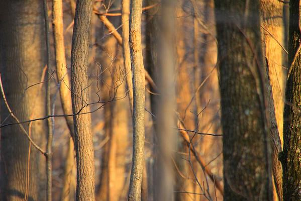 2011_03_16 Woods