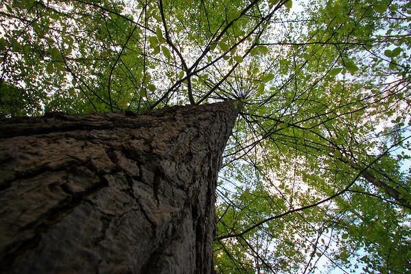 2011_05_11 Tree