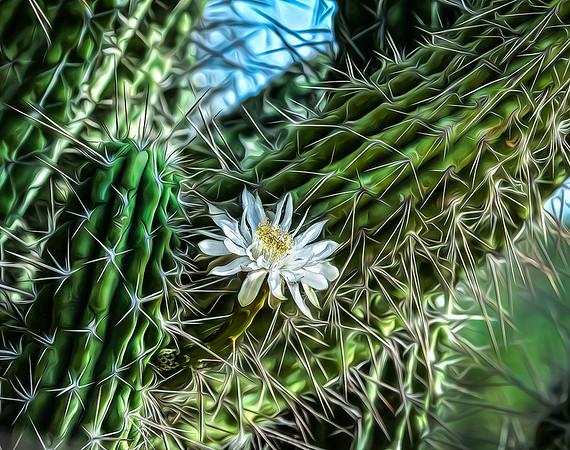 White Cactus Flower OPTO