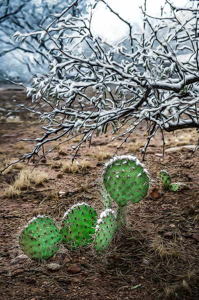 Winter in the Desert OPTO