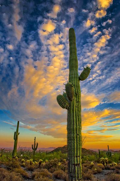 Saguaro Sunset 3 OPTO