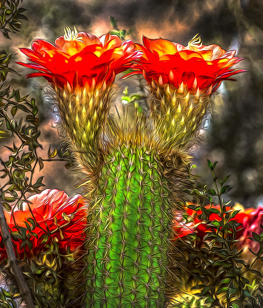 Tourch Flower OPTO