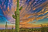 Saguaro Sunset 2 OPTO