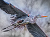 Great Blue Heron OPTO