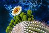 Saguaro Study 4 OPTO
