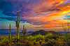 Saguaro Sunset OPTO