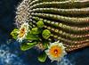 Saguaro Study 2 OPTO