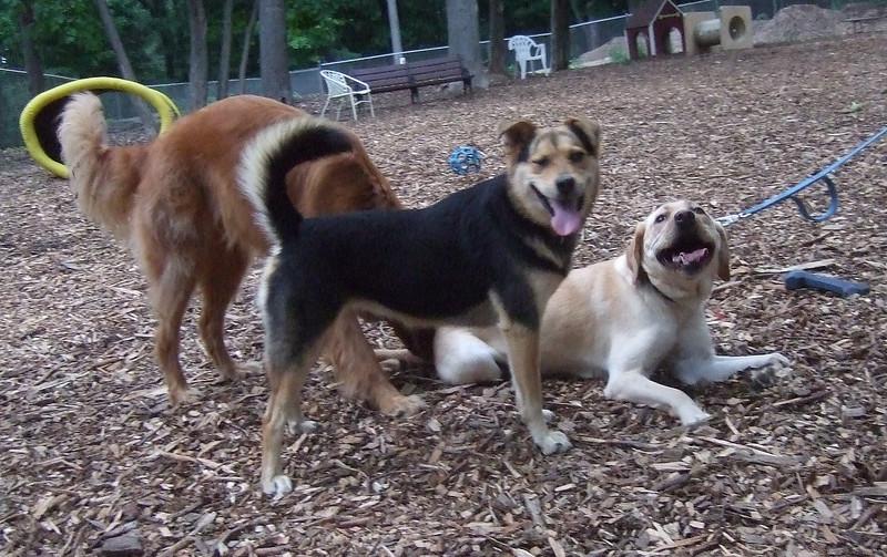 Annie, Maddie, Dakota