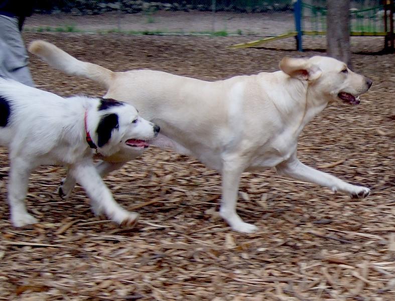Barni, Marley (aussie mix boy pup)