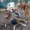 Dakota, Maddie, Shamus