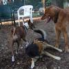 Dakota, Maddie, Shamus 2