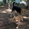 LUNA (puppy) & Maddie 13a