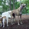 Marley (greyhound rescue), Molly