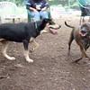 Bear ( pup ) & MOCHA