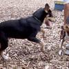 BEAR ( pup ) & Daisy