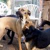DIVOT (florida girl), MADDIE (indiana stockdog) PLAYMATES
