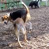 HENRI (beagle), FOXI (shiba inu)