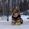 MADDIE (ball, snow)