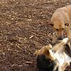BUFFY & MADDIE ( playmates ) 3