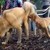 BELA ( pup ) & ROBIN