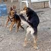 MAX (beagle) & Maddie