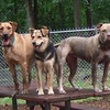 BUFFY, LUCY, MADDIE, mud, table