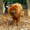 MIA (chow), MADDIE (indiana stockdog)