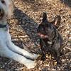 Keesha & BAILEY (goldendoodle)
