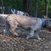July 27 Mystery Dog (springer)