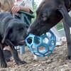 HARVEY guide pup, Wendy's),  MOJO